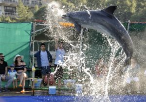 Icmeler Dolphin Show